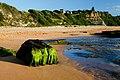 Turimetta beach narrabeen sydney nsw australia (3204947051).jpg