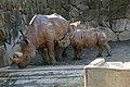 Ueno zoo, Tokyo, Japan (4072155500).jpg