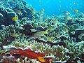 Underwater Moalboal 2.jpg