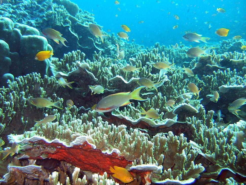 Underwater Moalboal 2