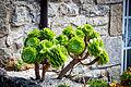 Unidentified plant in France (15217222367).jpg