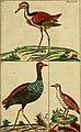 Unterhaltungen aus der Naturgeschichte (1795) (14726731616).jpg