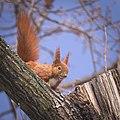 Up on a tree (40951781491).jpg