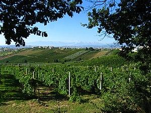 Pic taken outside Corropoli, Abruzzo, Italy. V...