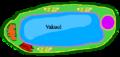 Vakuol i Växtcell.png