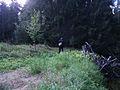 Valgemetsa mets.JPG