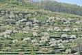 Valle del Jerte 13.jpg