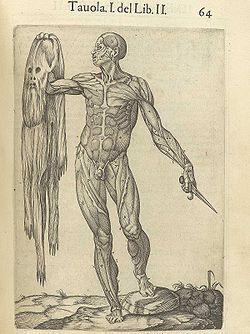 Juan Valverde de Amuscos Historia de la composicion del cuerpo humano (Rome, 1560)