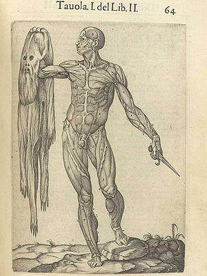 Juan Valverde de Amusco - Juan Valverde de Amusco's Historia de la composicion del cuerpo humano (Rome, 1560).