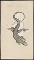 Varanus bengalensis - 1700-1880 - Print - Iconographia Zoologica - Special Collections University of Amsterdam - UBA01 IZ12400033.tif