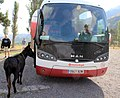 Vardzia donkey Gruzia 2019 2.jpg