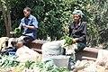 Vegetable business.jpg