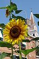 Venezia, girasoli e campanile.JPG