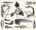 Vertebrate Jurassic fossils.jpg
