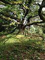 Verwunschener Baum.jpg