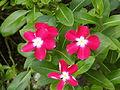Victoria Memorial Garden's Flowers.JPG