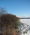 View along a hedge field boundary - geograph.org.uk - 1630575.jpg