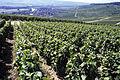 Village de Cumieres (51) hzt Cl.J.Weber (23050573373).jpg