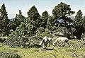 Vinuesa, Sierra del Portillo de Pinochos 04.jpg