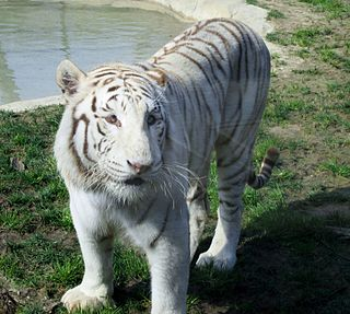 zoo in Italy