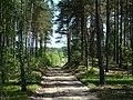 WILCZE ŁUGI wiosna 36 - panoramio.jpg