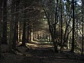 Walk in the woods in January - geograph.org.uk - 1118670.jpg