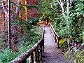 Walkway to the Millbuies Loch - geograph.org.uk - 1346512.jpg