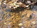 Wandern im November in Todtmoos - panoramio (10).jpg