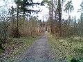 Wanderweg - Bietigheimer Forst - geo.hlipp.de - 23624.jpg