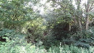 Braeburn Park - Wansunt Pit