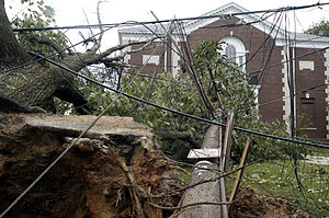 Effects of Hurricane Isabel in Maryland and Washington, D.C. - Tree and power line damage in Washington, D.C.