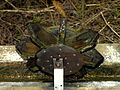 Waterwheel over trough.JPG