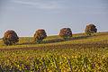 Weininsel 2014 16.jpg
