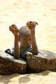 West Africa (2231553050).jpg