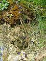 WikiProjekt Landstreicher Geotop Eistobel 16.jpg