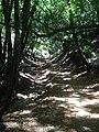 Wildcat Loop Trail - panoramio.jpg