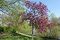Wilhelminapark, Breda P1460805.jpg