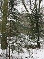 Winter in Elmstead Woods (3) - geograph.org.uk - 1655341.jpg