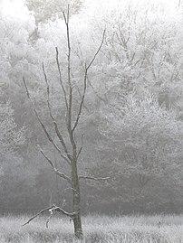 Winterimpression Schwarzes Wasser, abgestorbener Baum.jpg
