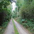 Woodland Lane, running through Barnsnap Wood - geograph.org.uk - 53421.jpg