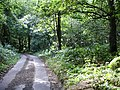 Woodland on Coldharbour Road - geograph.org.uk - 213934.jpg