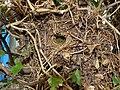 Wren Nest 24-03-12 (7011861135).jpg