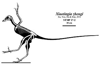 Xiaotingia - Skeletal restoration