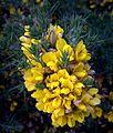 Yellow Flowers (5795738854).jpg