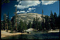 Yosemite National Park YOSE3441.jpg