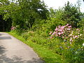 Zamilapark - Blumenbeet am Wegrand.JPG