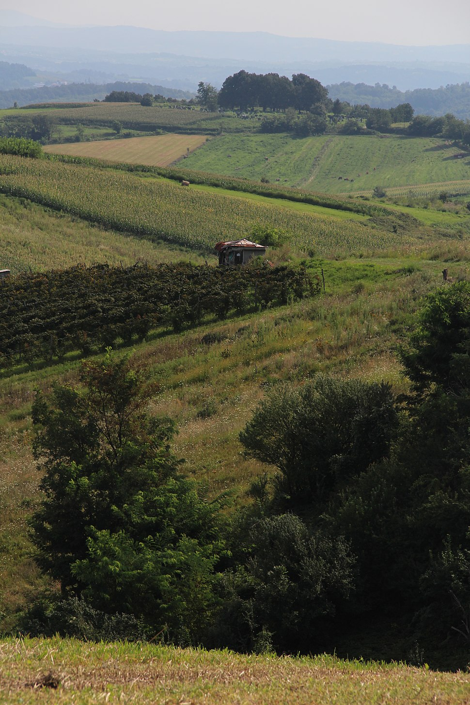 Zarube - opština Valjevo - zapadna Srbija - panorama 4