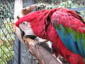 Zoo praha mg 003.jpg