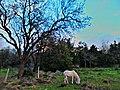 Αλογάκι - panoramio.jpg