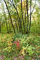 Агармишський ліс 1.JPG